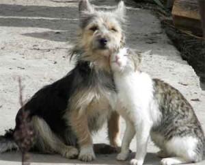 Castração de animais entra na pauta de legislativos municipais, como o de São Paulo