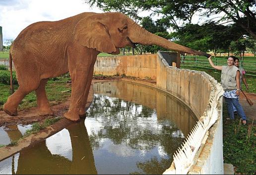 Zoológico de Goiânia poderá ser fechado caso projeto de lei seja aprovado na Câmara Municipal.